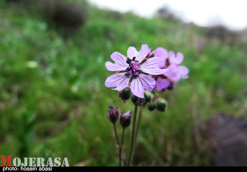 بهار در مناطق کوهستانی زنجان